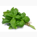 Organic Basil Fresh 2oz