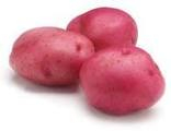 Organic Red Potato